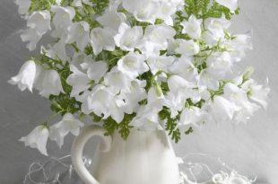 بالصور صور زهور , الزهور وجمالها في صور 86 13 310x205