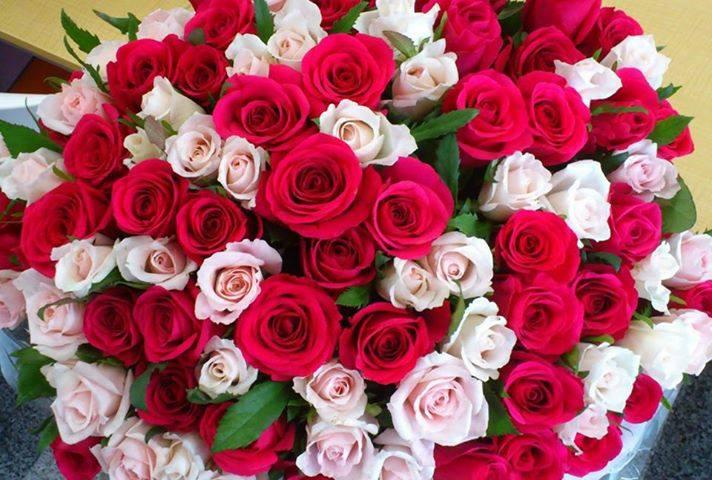 بالصور صور زهور , الزهور وجمالها في صور 86 2