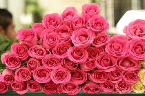 بالصور صور زهور , الزهور وجمالها في صور 86 5