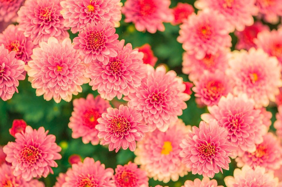 بالصور صور زهور , الزهور وجمالها في صور 86 6
