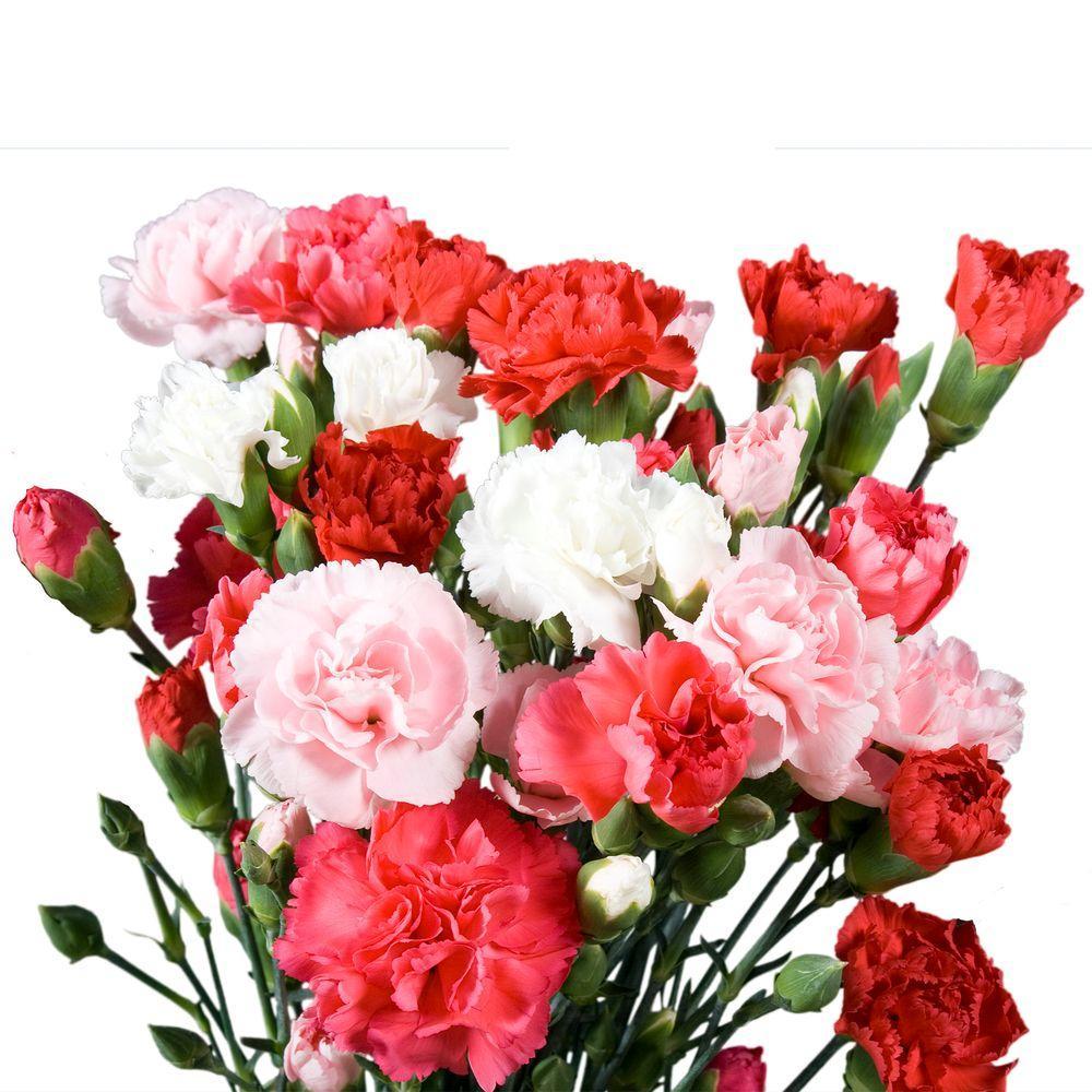 بالصور صور زهور , الزهور وجمالها في صور 86 7