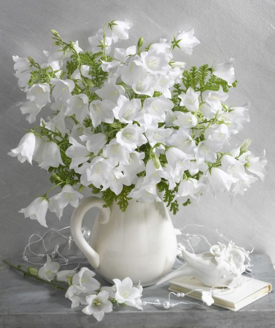 بالصور صور زهور , الزهور وجمالها في صور 86