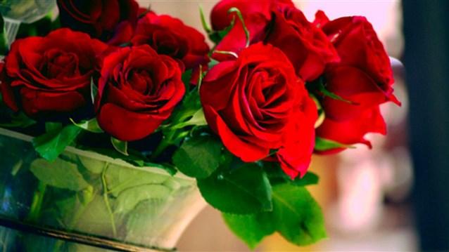 بالصور الورد الاحمر في الحلم , وردات تخطف العيون 13046 1