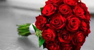 بالصور الورد الاحمر في الحلم , وردات تخطف العيون 13046 2 310x165