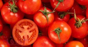 صور تفسير احلام الطماطم , الطماطم في المنام