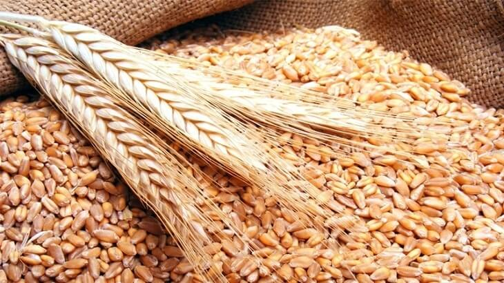صور تفسير حلم حصاد القمح , القمح في المنام