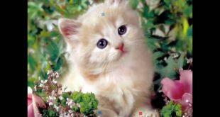 صور صور قطه جميله , اجمل صور قطط