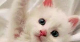 صور صور قطط كيوت , اجمل القطط