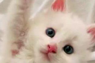 صورة صور قطط كيوت , اجمل القطط