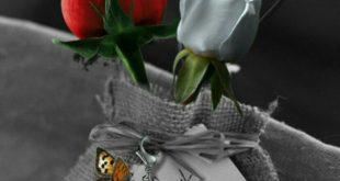 صورة صور ورد رومانسيه , الورد لغة الرومانسيه