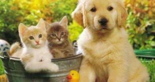 صور صور قطط وكلاب , اروع حيوانات اليفة