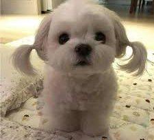 صورة صور كلاب كيوت , اوفي صديق للانسان
