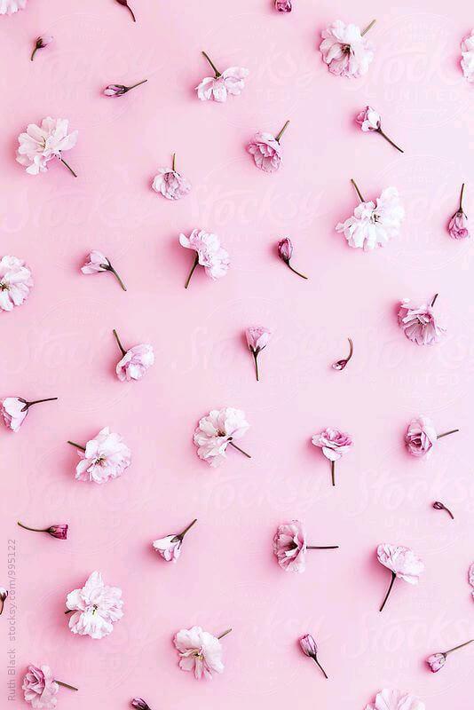 صورة صور هاديه ورديه , هدوء وجمال الورد