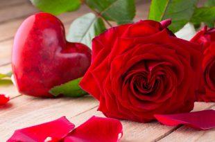 صور اجمل صور الورد الاحمر , روعة الورد الاحمر وجماله