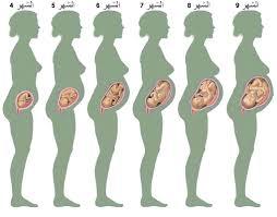 صورة مراحل نمو الجنين بالصور , مراحل نمو الجنين من البداية للنهاية في صور