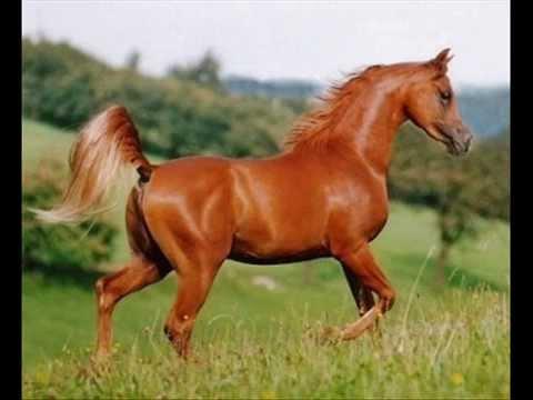 صورة اجمل خيول في العالم , احلى انواع جياد بالدنيا