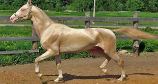 صور اجمل خيول في العالم , احلى انواع جياد بالدنيا
