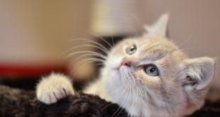 صور صور قطط جميلة , اروع قطط كيوت