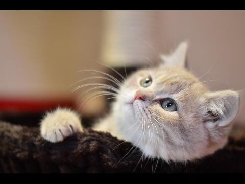 صورة صور قطط جميلة , اروع قطط كيوت