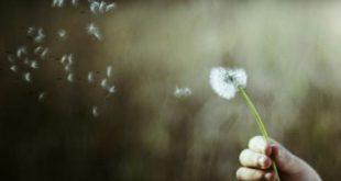 صور صورمكتوب عليها عبارات حلوه , مجموعة عبارات جميلة