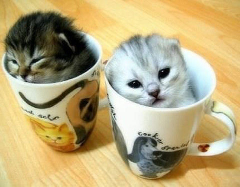 صور صور قطط صغيرة , صورقطط كيوت خالص