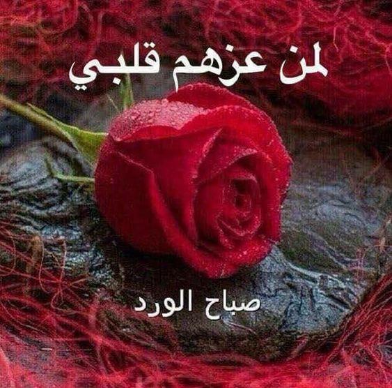 صورة صورصباح الخير رومانسيه , اجمل صور صباح الخير
