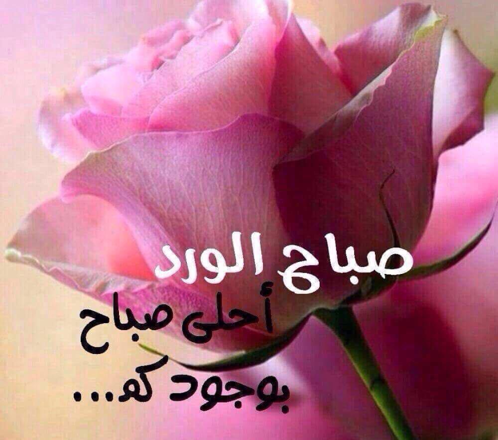 صورة صباح الورد حبيبي , بوسترات تحيات صباحيه للاحبه