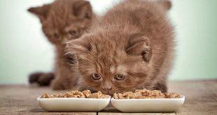 صورة افضل طعام للقطط , احسن وجبات للهرر