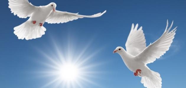 صورة افكار عن السلام , عناصر مهمه للسلام