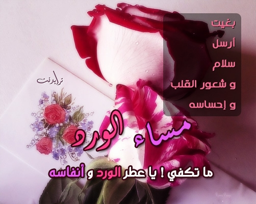 صورة رسائل مساء الخير حبيبي , اجمد مساء الخير حبيبي 6394 2
