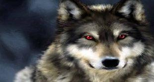 تفسير الحلم بالذئب
