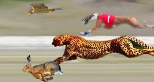 صورة اسرع الحيوانات في العالم , تعرف علي اسرع حيوان في العالم 12289 1 310x165